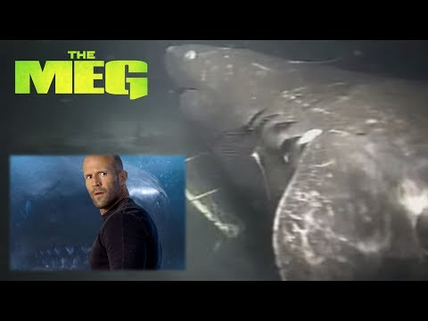 The Meg - Real Megalodon Shark Caught On Camera