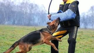 Canine Sports Dog Training