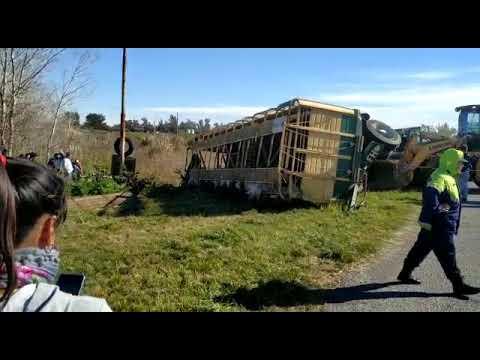 Detenidos por cazar chanchos que habían caído de un camión que volcó a la vera de la Autovía 2