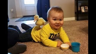 Funniest  Duck Trolling Babies and Kids -  Funny Babies and Pets Compilation
