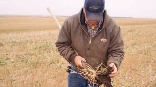 The Next Step: Adding Cover Crop To A No-Till System