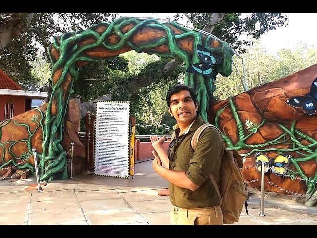 Trichy Butterfly Park A Quick Complete Tour Youtube