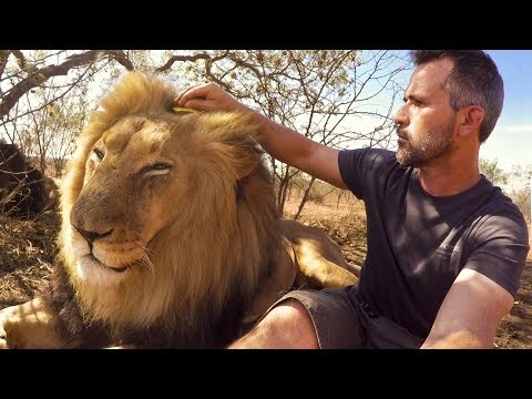 Brushing Bongani | The Lion Whisperer