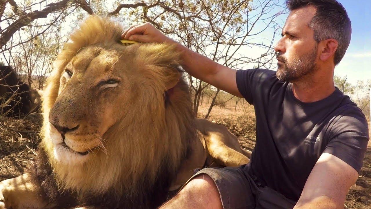 brushing-bongani-the-lion-whisperer