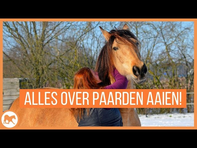 Alles wat je wil weten over het aaien van paarden!