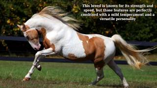 American Quarter Horse - strong breed