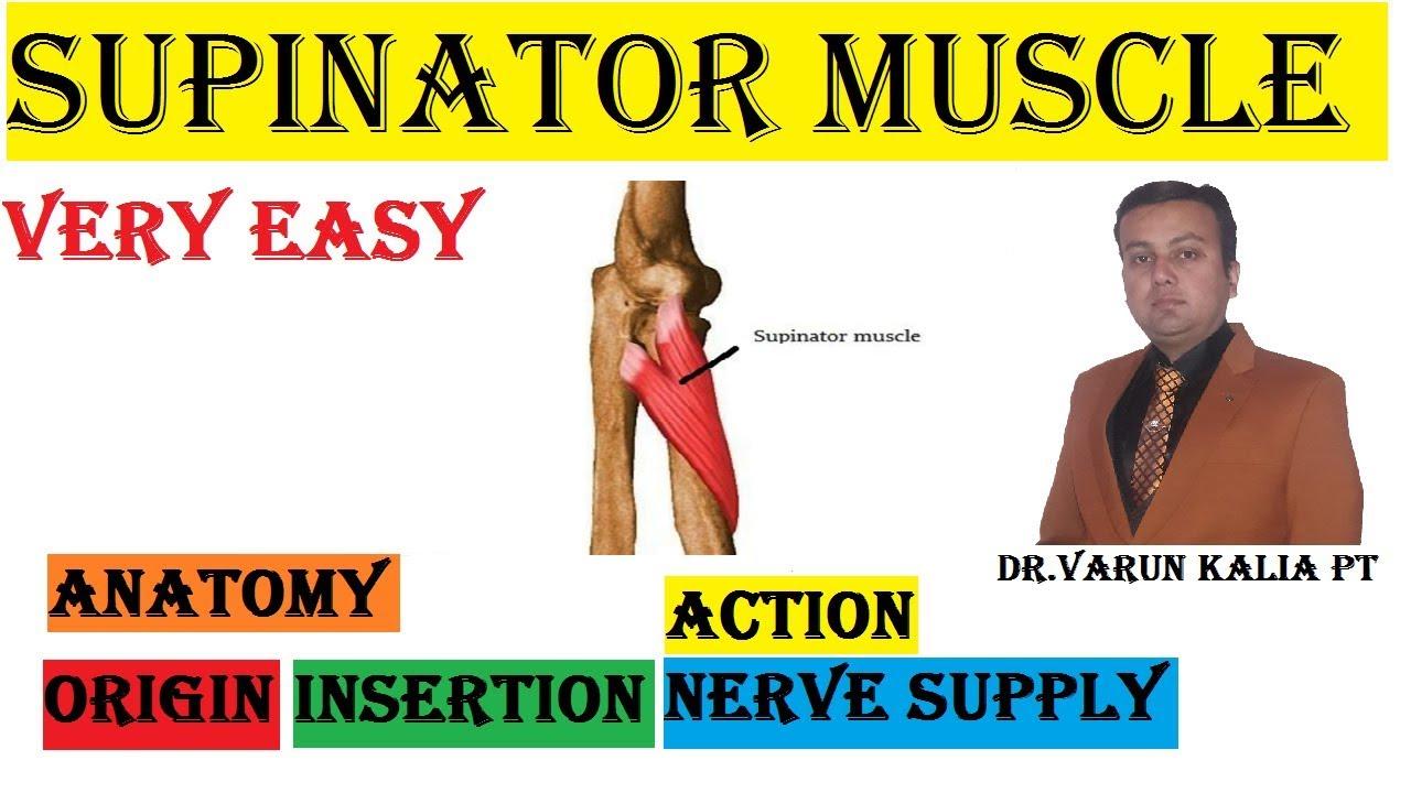 Supinator Muscle Anatomy By Dr Varun Kalia Pt Youtube