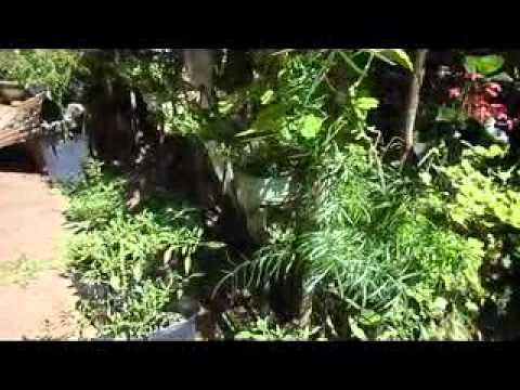 Home Gardening Gewathuwagawa Youtube