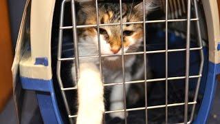 Animal Crush Video Maker Gets 50 Year Prison Sentence