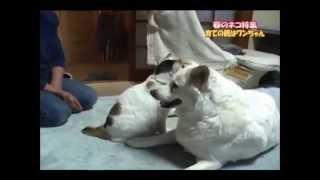 【感動】 猫たちを育てた犬 thumbnail
