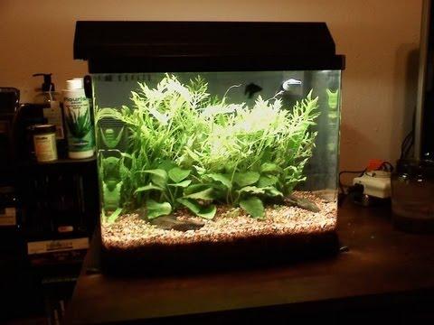 14 Gallon Freshwater Planted Biocube Youtube