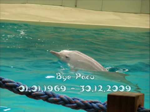 Paco The Sotalia Dolphin