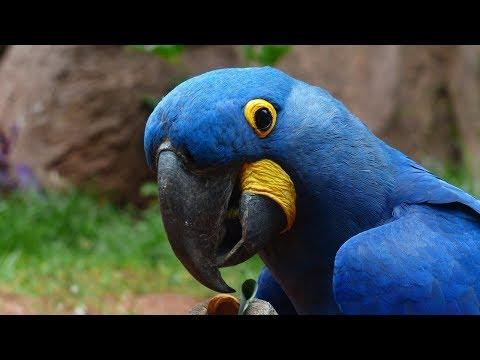 12 Цікавих Фактів Про Папуг - 12 Interesting Facts About Parrots