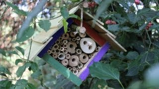 DIY Insect Hotels - 4 different designs for hanging in trees & on walls.  4 hôtels à insectes.