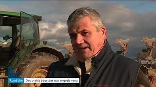 Face au manque d'herbe, Hervé Wendling a dû trouver une autre solution pour ses 400 moutons