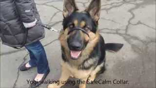 Gentle & Safe Dog Training Collar By Safecalm  - Dog Whisperer Big Chuck Mcbride