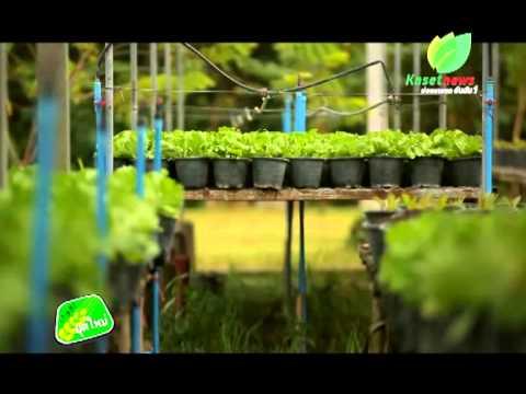เกษตรยุคใหม่ เทคนิคการปลูกผักสวนครัวให้ได้ผลผลิตที่ดี ตอนที่1