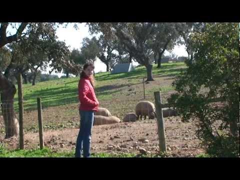 Farm in Alentejo (Traveline Portugal)