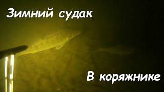 Подводная охота на судака,зима 2019-2020,поиск судака в корягах...