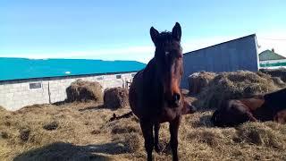 Кфх содержания лошадей