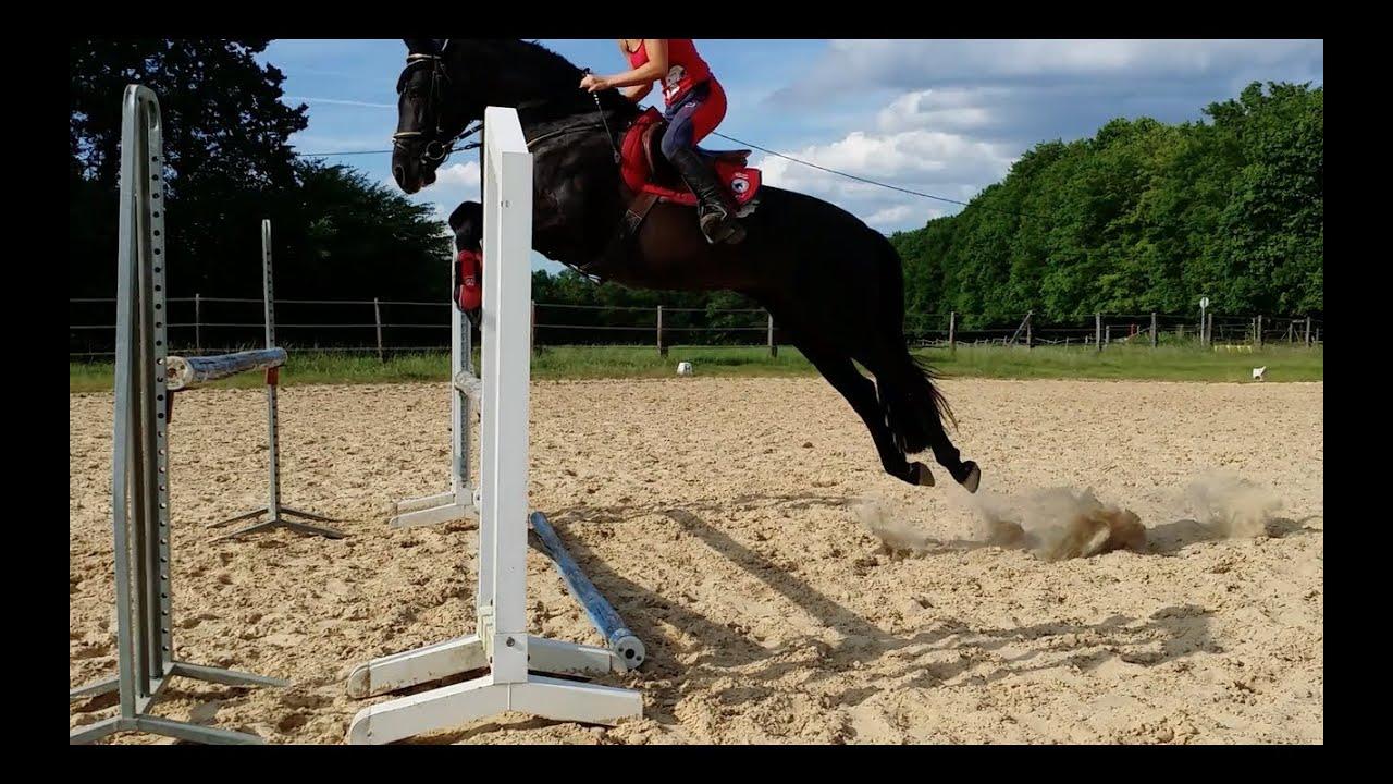cheval espagnol saut