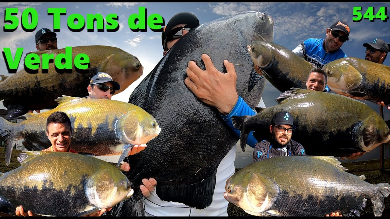 Clube Pescar - 50 tons de Verde - Fishingtur na TV 544