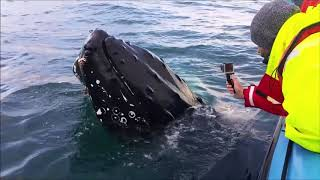 Video Whale Watching in Skjálfandi Bay, Húsavík, Iceland (2017) download MP3, 3GP, MP4, WEBM, AVI, FLV Desember 2017