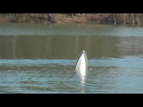 Cobra fast boat crash offshore RC brushless