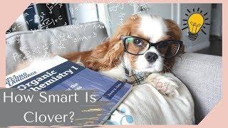 How Smart is Clover? | Dog Intelligence Test! Mp3