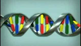 Animation:  How DNA Works