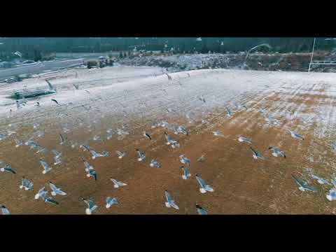Drone flying with the seagulls