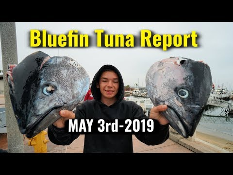 Bluefin TUNA Catch REPORT - Fisherman's Landing 5/3/2019