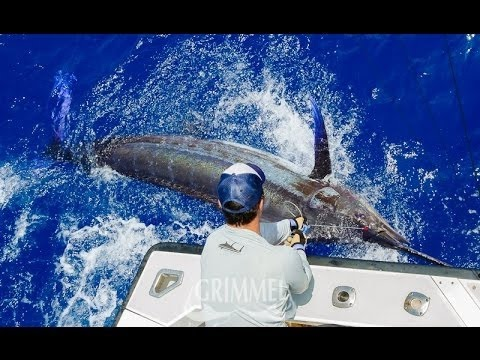 ascension island spearfishing ascensions island big game fishing 2016 youtube