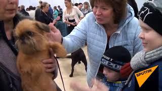 В Ростове-на-Дону прошла ежегодная международная выставка собак