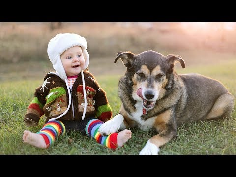 Funny Babies Laughing Hysterically At Dogs Compilation (2015)