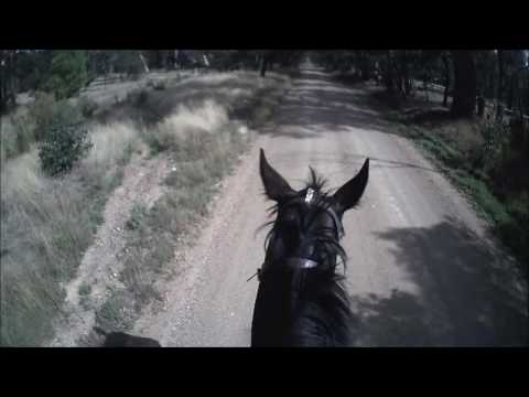 Sovereign Wealth - PT Road & Track - Christina April 2017