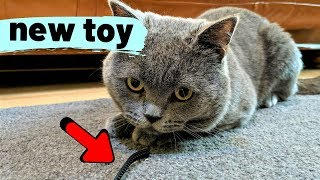 Tom's Funny Cat videos - British Shorthair #01