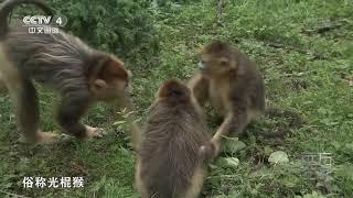 [远方的家]世界遗产在中国 生物多样性的宝库| CCTV中文国际