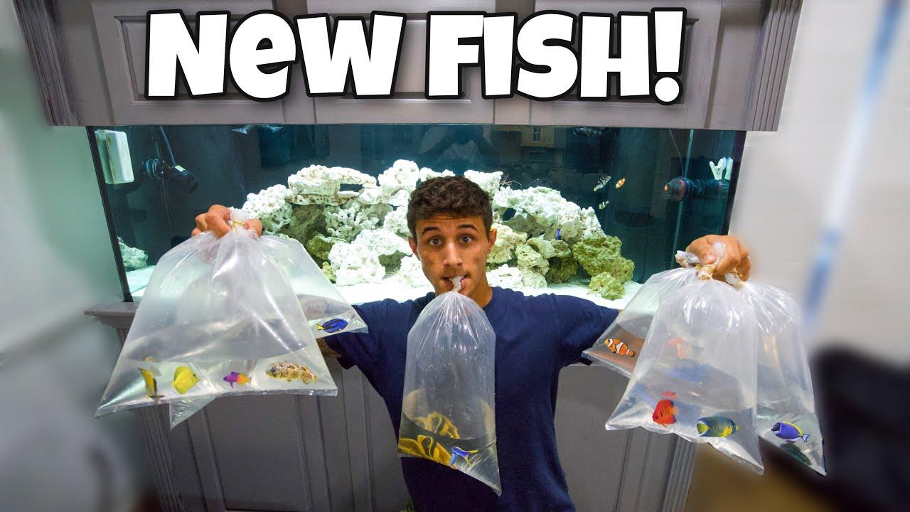 STOCKING My 200 Gallon AQUARIUM With NEW FISH!!