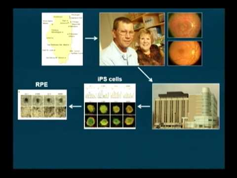 Stem Cells and Vision Research - Saving Sight 2014