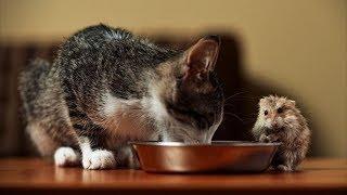 НОВЫЕ ПРИКОЛЫ С КОШКАМИ 2019! Смешные Коты и Собаки. ПРИКОЛЫ С ЖИВОТНЫМИ. #19