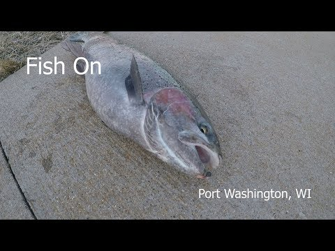 Fish On Port Washington, WISCONSIN