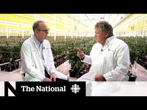 Canadian cannabis producer Aphria on what's next after legalization   Extended Interview