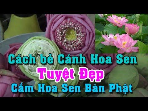cấm hoa sen đẹp tại kienthuccuatoi.com