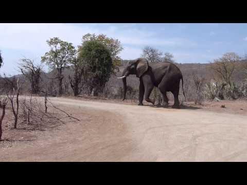 Chipinda Pools elephant visit