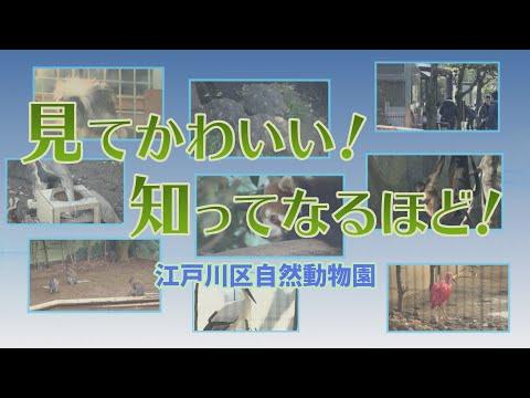 見てかわいい!知ってなるほど!江戸川区自然動物園