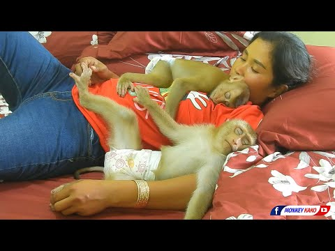 Funny Animals | Baby Monkey KAKO & LUNA With MOM | Lovely Sleeping Compilation