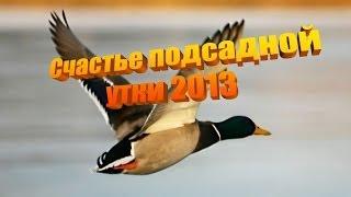 Счастье подсадной утки 2013. Охота с подсадной уткой.
