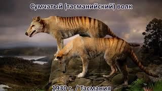 ВЫМЕРШИЕ ЖИВОТНЫЕ за последние 500 лет. Их уже не вернуть...