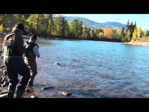 Bulkley Steelhead, Fly Fishing Trout Creek 2, Wolfgang Fabisch